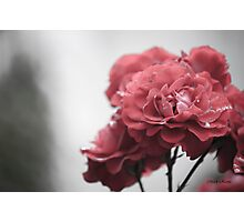 Dreary Red Photographic Print