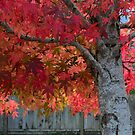 Tree of flames by Jean Poulton