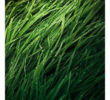 Grass Texture Photographic Print