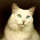 Angel Eyes by Scott Mitchell