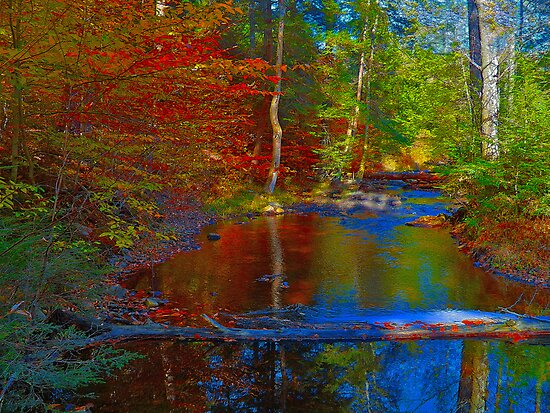 Autumn Reflections by Mike Griffiths