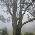 Misty Tree by Sinclair Moore