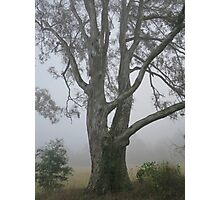 Misty Tree Photographic Print