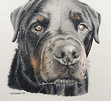 Max the beautiful Rottweiler by micheleashby