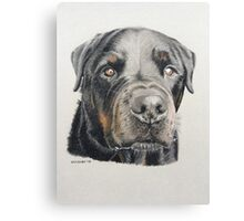 Max the beautiful Rottweiler Canvas Print