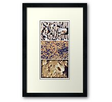 Shells by Three Framed Print