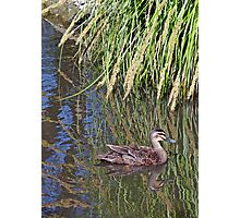 Duck Reflection Photographic Print