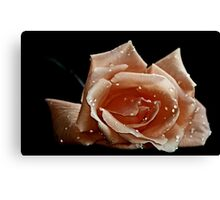 """"""" First Rose of the Season..."""" Canvas Print"""