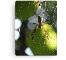 Spider In The Morning Sun - Araña En La Luz Del Sol De La Mañana Canvas Print
