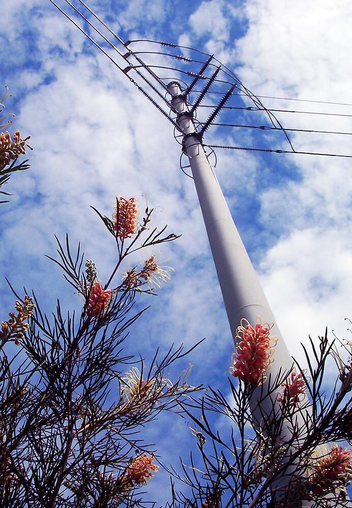 Wires Over Wattle by Robert Phillips