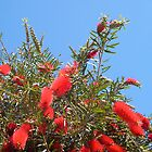 Bottle Brush by Robert Phillips