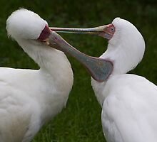 Grooming birds by TC3 Photography