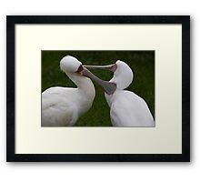 Grooming birds Framed Print