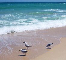 Seagull One by Robert Phillips