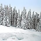 Snow covered trees by Arie Koene