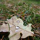 Weeping Oak by decorartuk