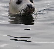 Seal head by TC3 Photography