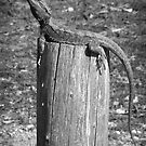 Dragon on a Post by Mossrocket
