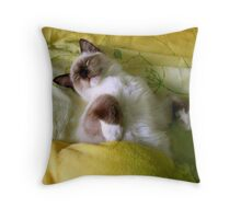 Sleeping Ragdoll Cat Throw Pillow