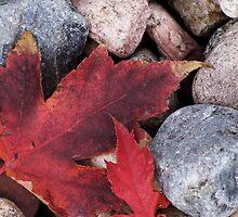 Fallen Leaf by Karen Jayne Yousse