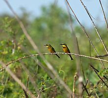 Little Bee-eaters by Sue Robinson