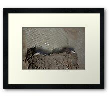 Swallow Chicks hatched Framed Print