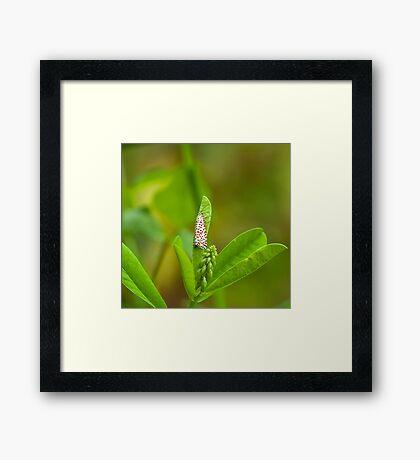 Crimson-speckled Footman Moth Framed Print