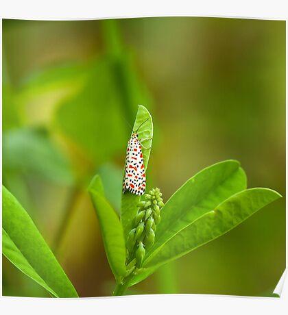 Crimson-speckled Footman Moth Poster