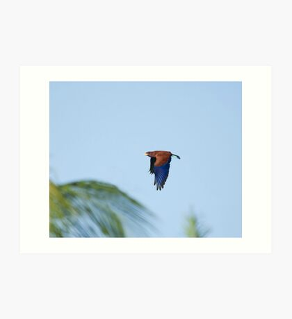 Broad-billed Roller and Palms Art Print