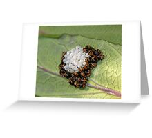 Common Green Shield Bugs Day 3 Greeting Card