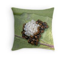 Common Green Shield Bugs Day 3 Throw Pillow
