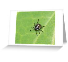 Common Green Shield Bug 2nd Instar Greeting Card