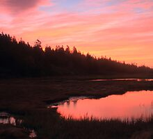 Salt Marsh at Dawn by Roupen  Baker