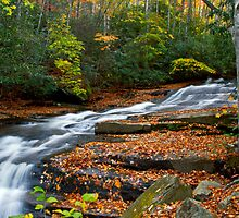 Autumn Flow by Christine Annas