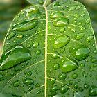 Water Drops by Jess Meacham