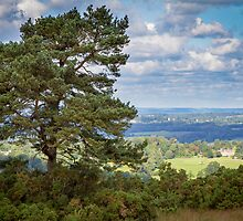 Lone Tree, Ashdown Forest by Jonathan Game