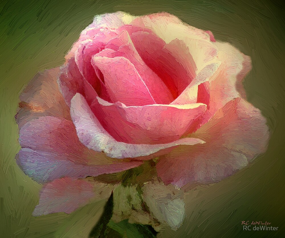 Coy Blush by RC deWinter