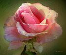Coy Blush by RC deWinter