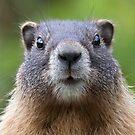 Marmot by WorldDesign