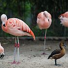 Four Flamingos by A.Lwin Digital - Chasing the Inspiration