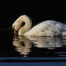 Westside Swan by NordicBlackbird