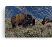 Bison Bull in the Sagebrush Canvas Print