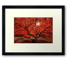 Red Lace Framed Print