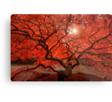 Red Lace Metal Print
