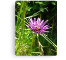 Purple Salsify Canvas Print