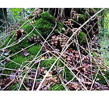 Tree trunk full of mushrooms Photographic Print