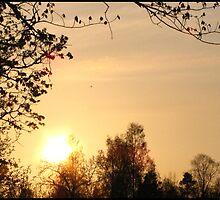 May Sun by ArtOfE