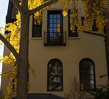 Washington, DC Facades - Dupont Circle Neighborhood in Yellow by Georgia Mizuleva