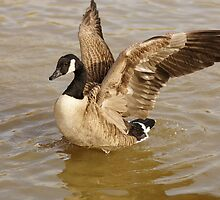 Goose workout by flashcompact