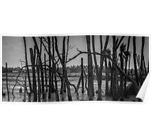 Black and White Wetlands Poster